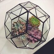 plants,hipster,cactus,terrarium,geometric,lifestyle,home accessory,beach house
