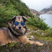 sunglasses,tree tribe,aviator sunglasses,blue lens,mirror lens,wooden glasses