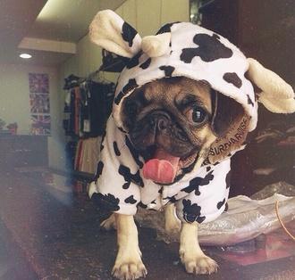 top cow pugs pet animal clothing animal
