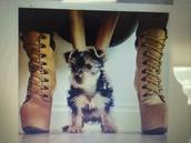 shoes,boots,high heels,zigi,zigisoho,zigi girl,ziginy,ziginy pauline,platform high heels