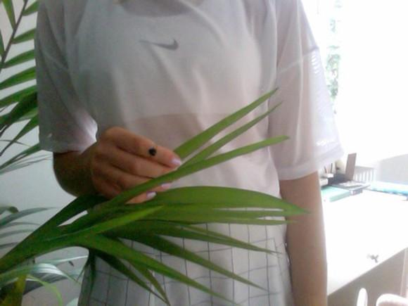 mesh t-shirt grunge pale pale grunge white mesh mesh tshirt atropina nike bra palm tree print tumblr