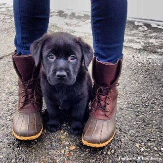 shoes boots cute puppy dog indie hipster jeans sperry wellies fall outfits winter boots flat boots brown boots