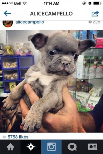 bag dog nike fitspo cute french bulldog