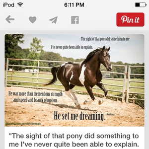 horserider419