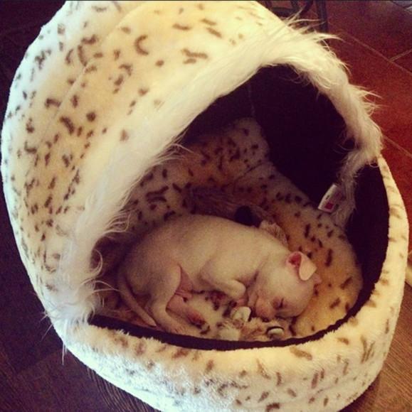 dog jewels bedding chihuahua animal