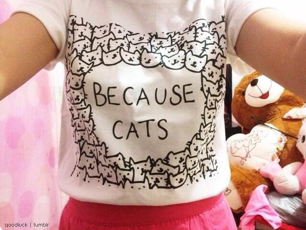 shirt cats