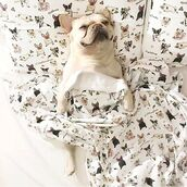 home accessory,yeah bunny,pugs,frenchie,cute,dog,bedding,pillow