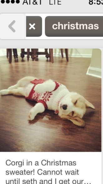 corgo dog welsh corgi christmas sleeping red and white christmas sweater style red and white sweater animal clothing holiday season