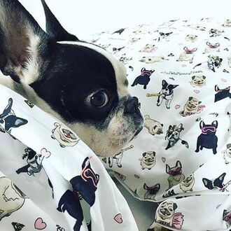 home accessory yeah bunny bedding pillow dog frenchie