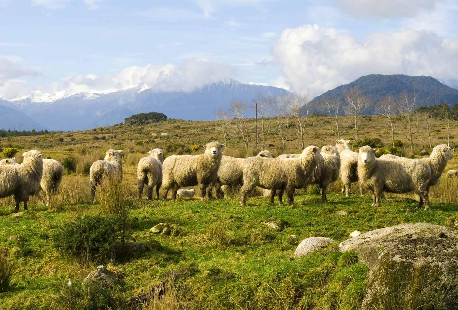Blarney Woollen Mills   Irish Gifts Online Shopping   Gifts from Ireland