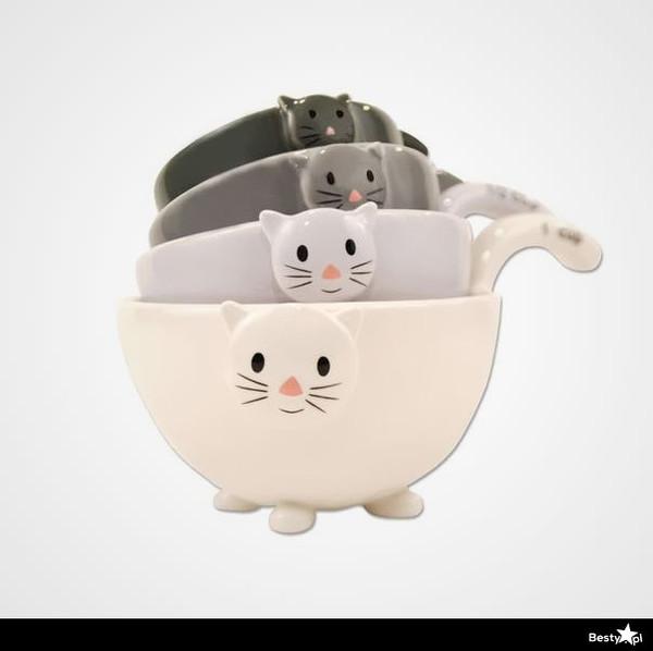 bag awww cute cats sweet